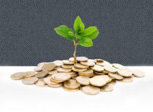 money-plant-2