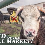 the-end-of-the-bull-market